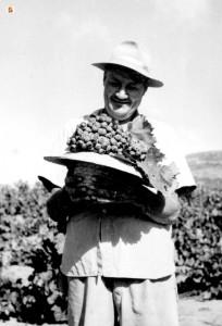uva raccolta durante la vendemmia