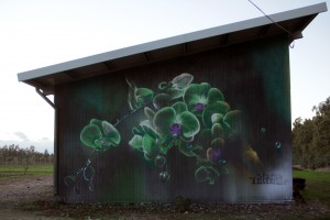 Orchid_ tecnica musta su muro, Marrubiu – copyright Manu Invisible