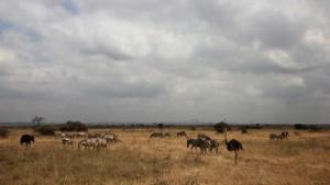 5_Nairobi National Park